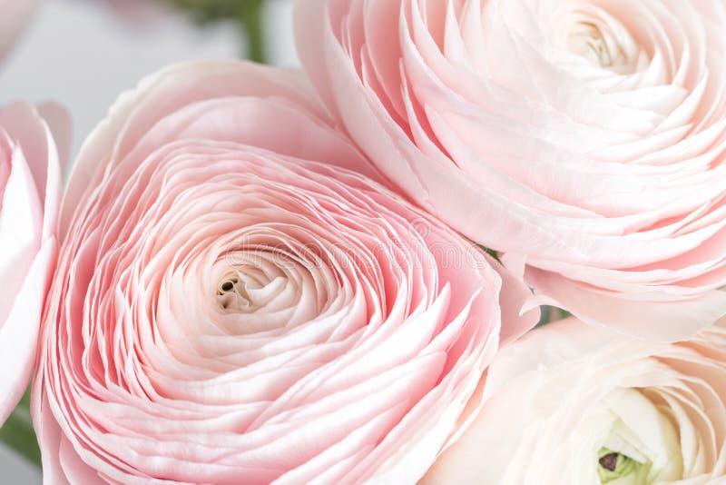 Viele überlagerten Blumenblätter Persische Butterblume Bündel blaß - rosa Ranunculus blüht hellen Hintergrund Tapete, vertikales  stockfotos