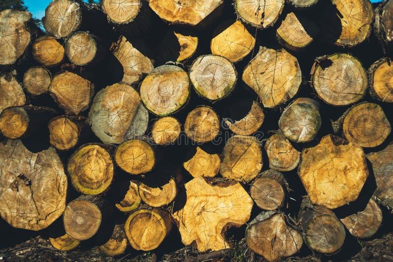 Viele Abschnitte von den Klotz des Brennholzes im Freien gestapelt, sonnen draußen Tageskonzept, freien Raum für Text, hölzerne B lizenzfreie stockbilder