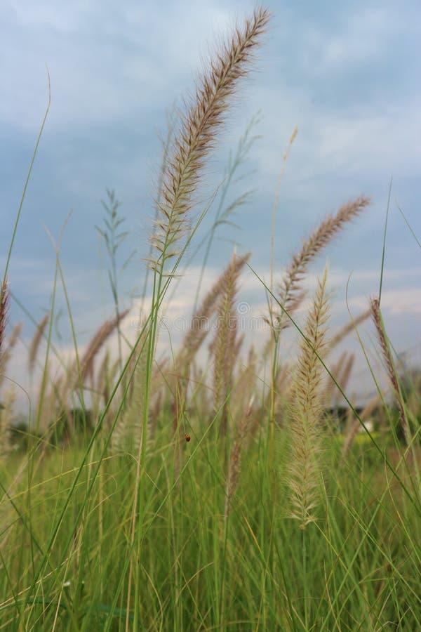 Viele bedecken wilde Blumen im graden und im blauen Himmel mit Gras stockfotografie