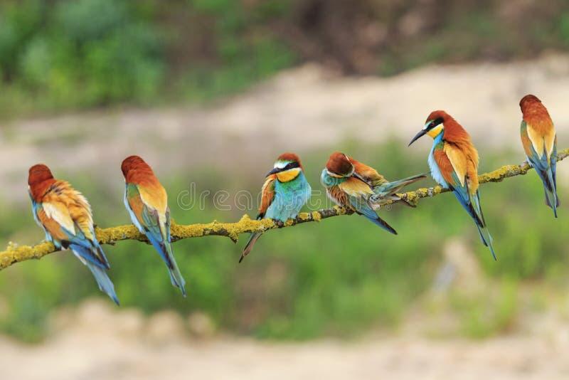 Viele bunten Vögel auf einer Niederlassung stockfotos