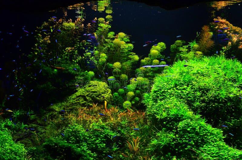 Viele farbigen kleinen Fische schwimmen tief in die Meerespflanze lizenzfreie stockfotos