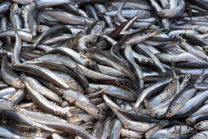 Viele Fische lizenzfreie stockbilder