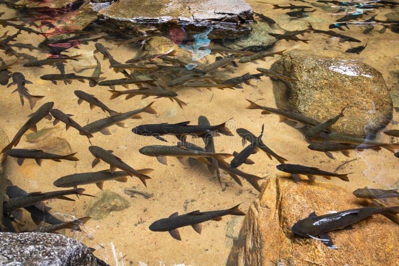 Viele Fische im Wasserfallhintergrund Der meiste populäre Wasserfall in Chanthaburi bei THAILAND stockbild