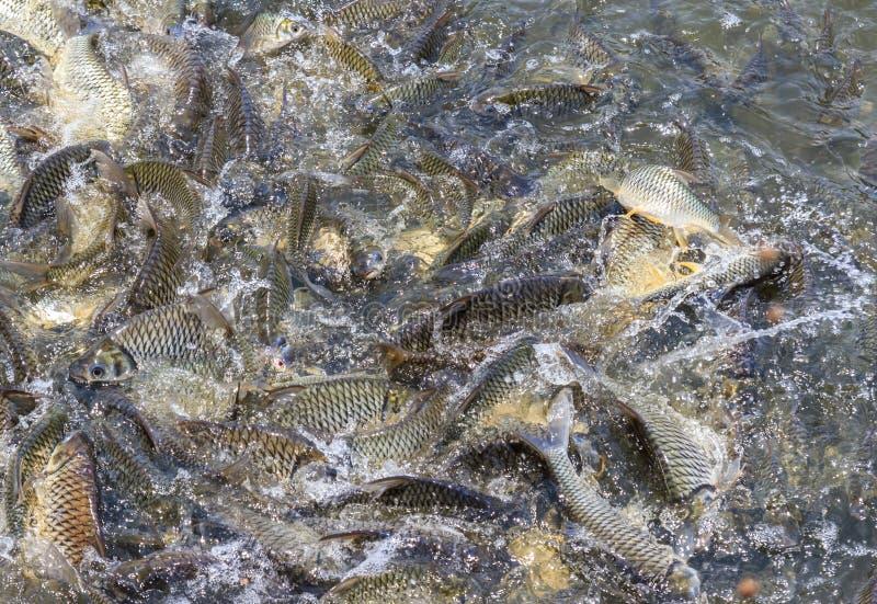 Viele Fische verderben Lebensmittel stockfotografie