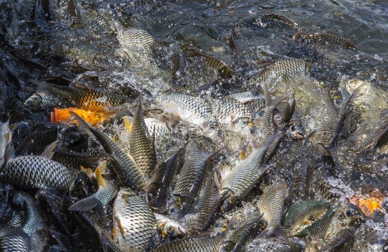 Viele Fische verderben Lebensmittel lizenzfreie stockbilder