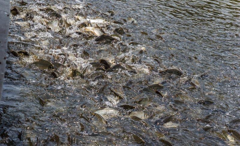 Viele Fische verderben Lebensmittel stockbilder