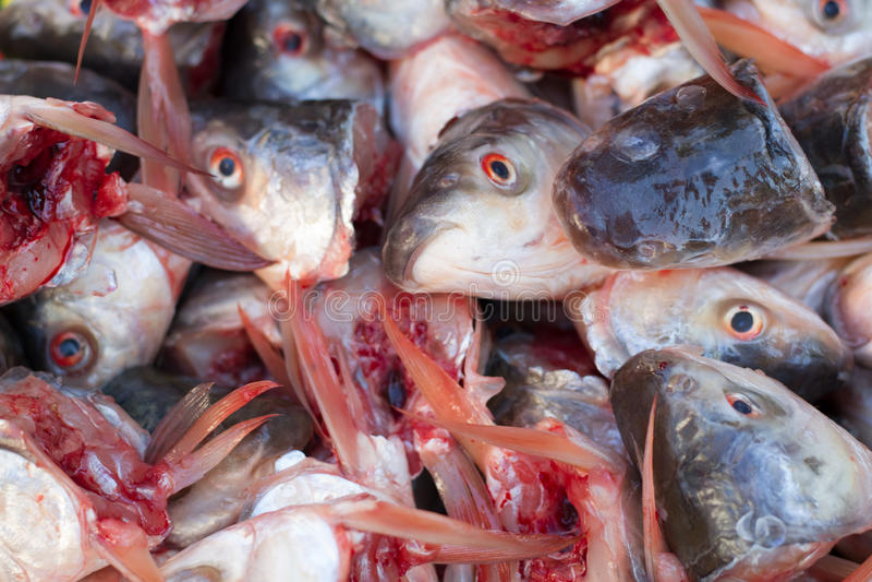 Viele Fischköpfe lizenzfreie stockbilder