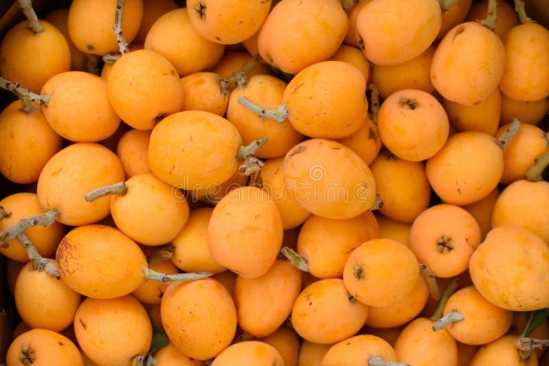 Viele Früchte der Mispel lizenzfreie stockbilder