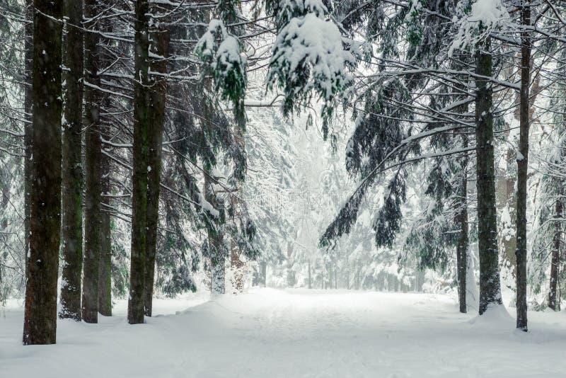 Viele frischer Schnee nach einem Blizzard stockbilder