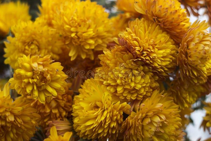 Herbstblumen Im Garten Stock Fotos Laden Sie 649 Royalty