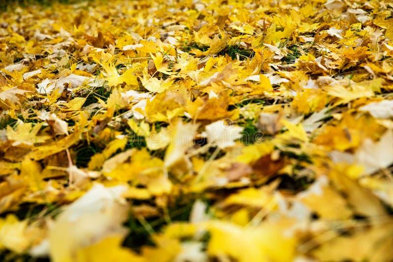 Viele gelbe Blätter am Boden lizenzfreie stockbilder