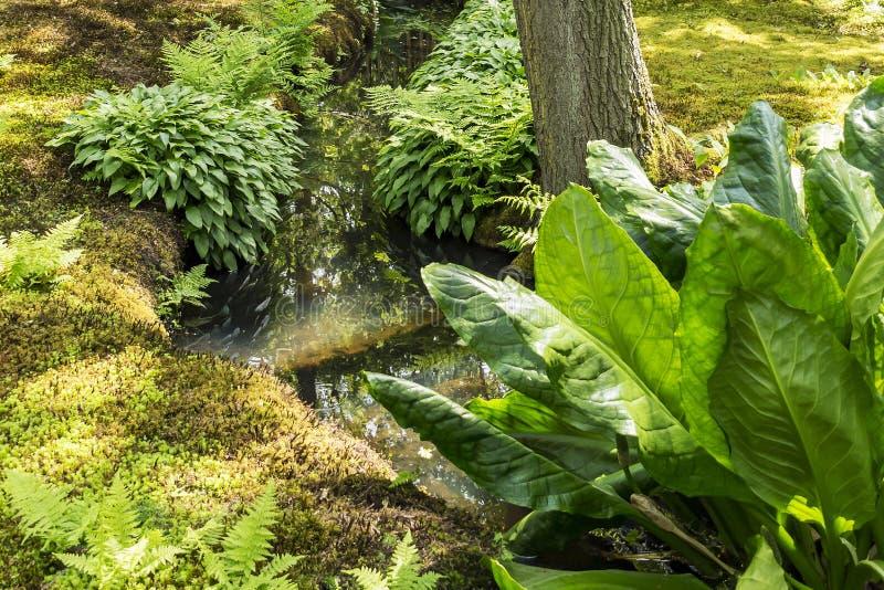 Viele grünen Abstufungen des Blattes und des Mooses im japanischen Garten in Den Haag, die Niederlande lizenzfreie stockbilder