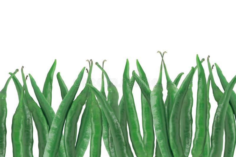 Viele grünen heißen kühlen Pfeffer lokalisiert auf Weiß stockfotografie