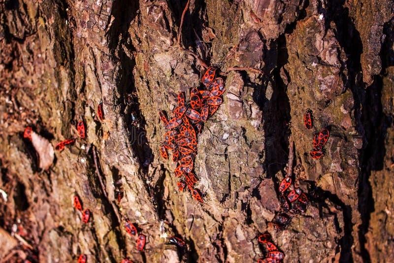 Viele Insekten auf der alten Baumrinde lizenzfreies stockfoto