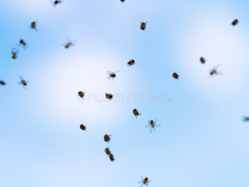 Viele kleinen spiderlings fliegen über den Himmel Junge Spinnen lizenzfreie stockfotos