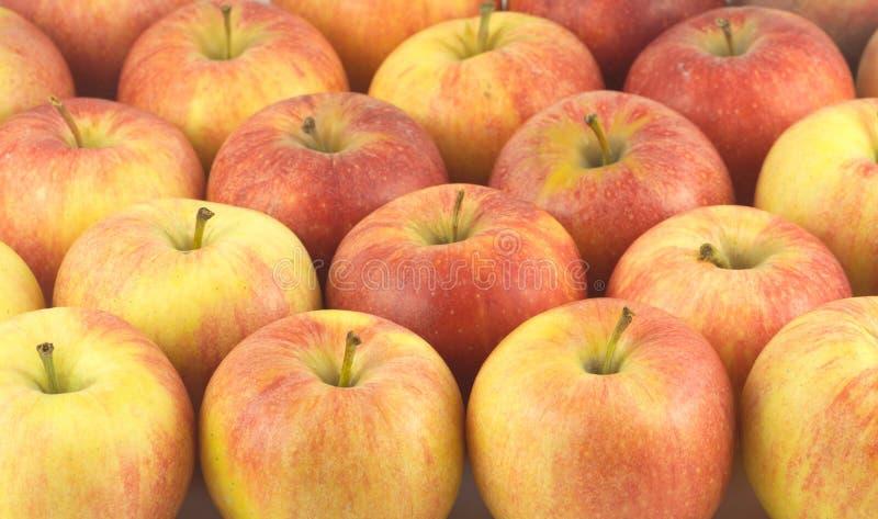 Viele reifen geschmackvollen Äpfel schließen oben lizenzfreie stockfotografie