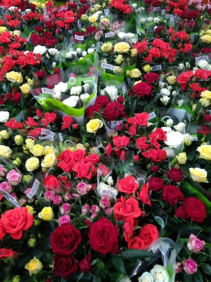 Viele Rosen von verschiedenen Farben stockfoto