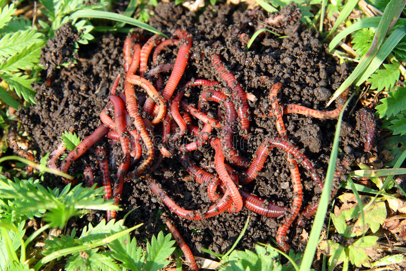 Viele roten Endlosschrauben im Schmutz lizenzfreies stockbild