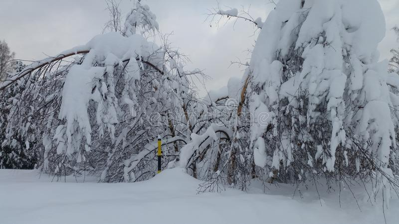 Viele Schnee stockbilder