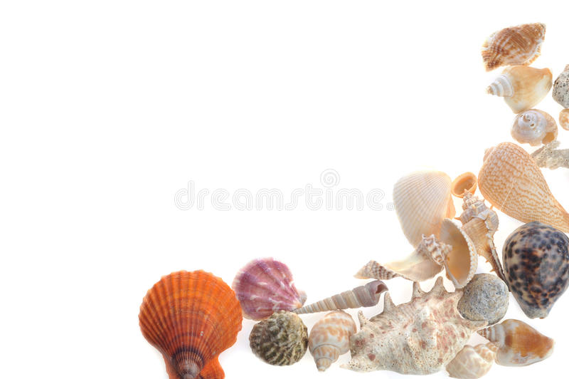 Viele Seecockleshells liegt auf Weiß stockfotos
