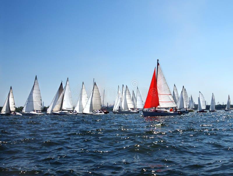 Viele Segelboote stockfotografie