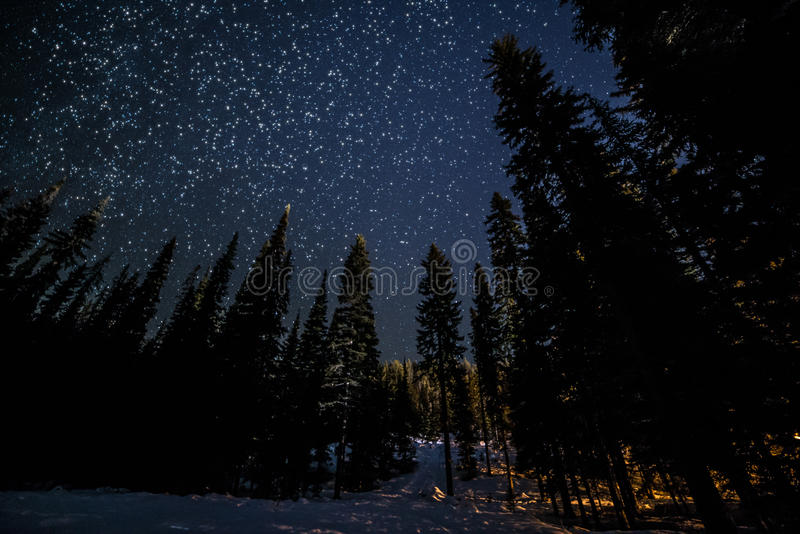 Viele Sterne über Forest Trees lizenzfreie stockfotografie