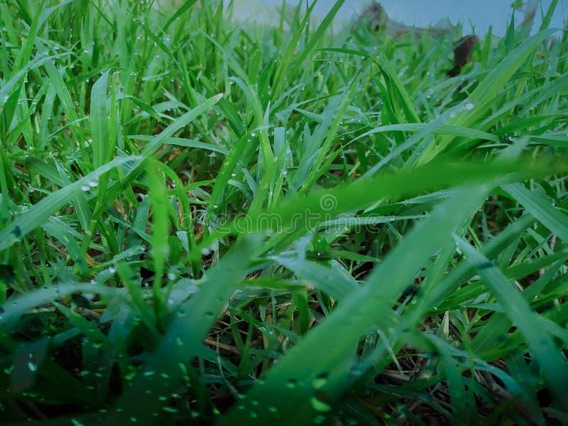 Viele Tautropfen auf die Oberseite des gr?nen Grases morgens, dort ist der orange Sonnenschein und f?hlt sich frisch, jedes Mal w stockfoto