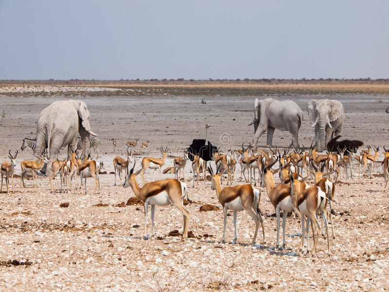 Viele Tiere am waterhole lizenzfreie stockfotos
