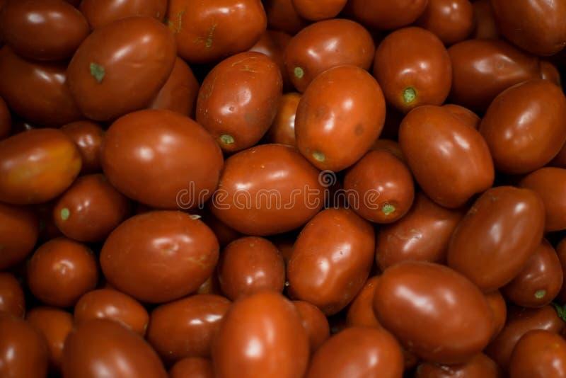 Viele Tomaten stockfotografie