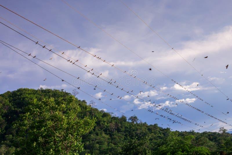 Viele Vögel, die zusammen sitzen, singen und sich putzen lizenzfreies stockbild