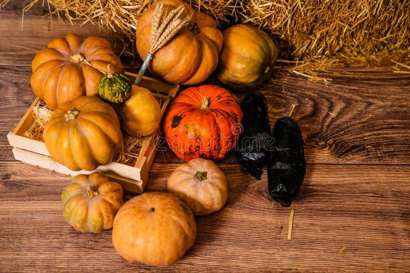 Viele verschiedenen Kürbise auf dem Boden für den Dekor für die Feier von Halloween stockbild