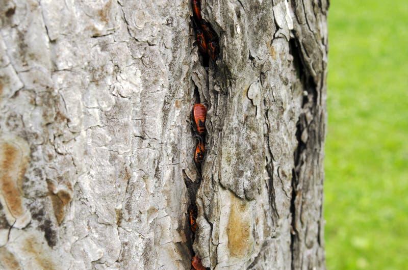 Viele Wanzen auf einem Baum lizenzfreies stockbild