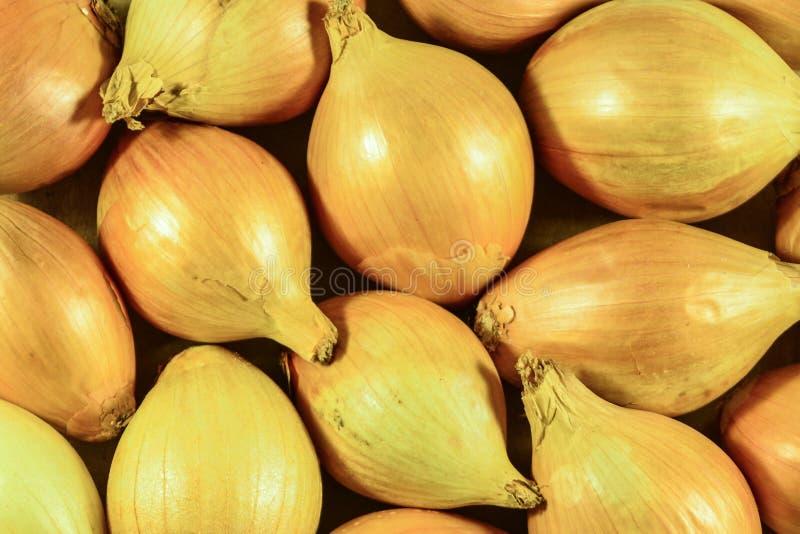 Viele weißen Zwiebeln Makro- oder Abschluss der Birne herauf den Hintergrund lokalisiert lizenzfreies stockbild