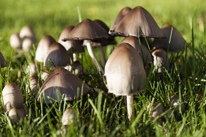Pilze Auf Rasen