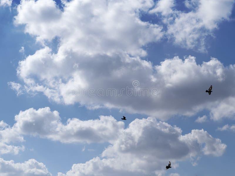 Viele Wolken und Fliegenvögel auf dem Hintergrund des blauen Himmels stockfotos