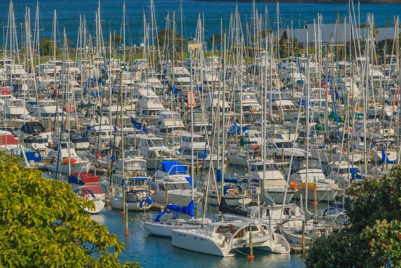 Viele Yachten im Jachthafen, Golf-Hafen, Auckland, in Neuseeland lizenzfreie stockbilder