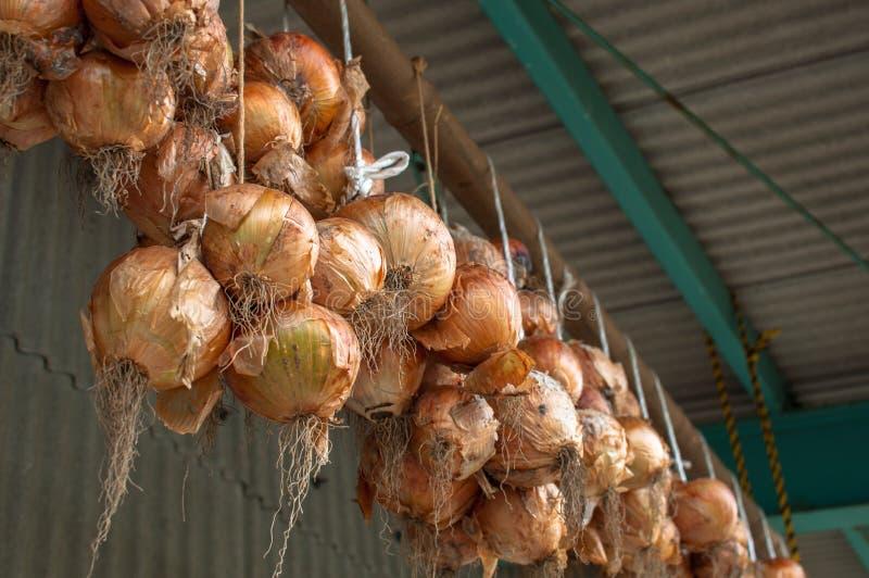 Viele Zwiebeln hangen in einem Schuppen zum Trocknen stockbild