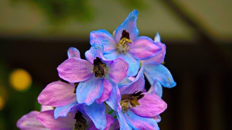 Vielfältige Farbe in einem Blütenstand lizenzfreie stockfotografie