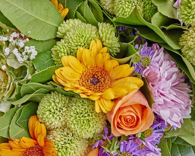 Vielzahl der bunten Blumennahaufnahme lizenzfreies stockfoto