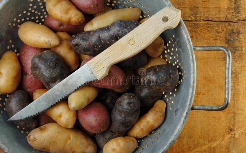 Vielzahl der Fisch-Kartoffeln im Colander stockbilder