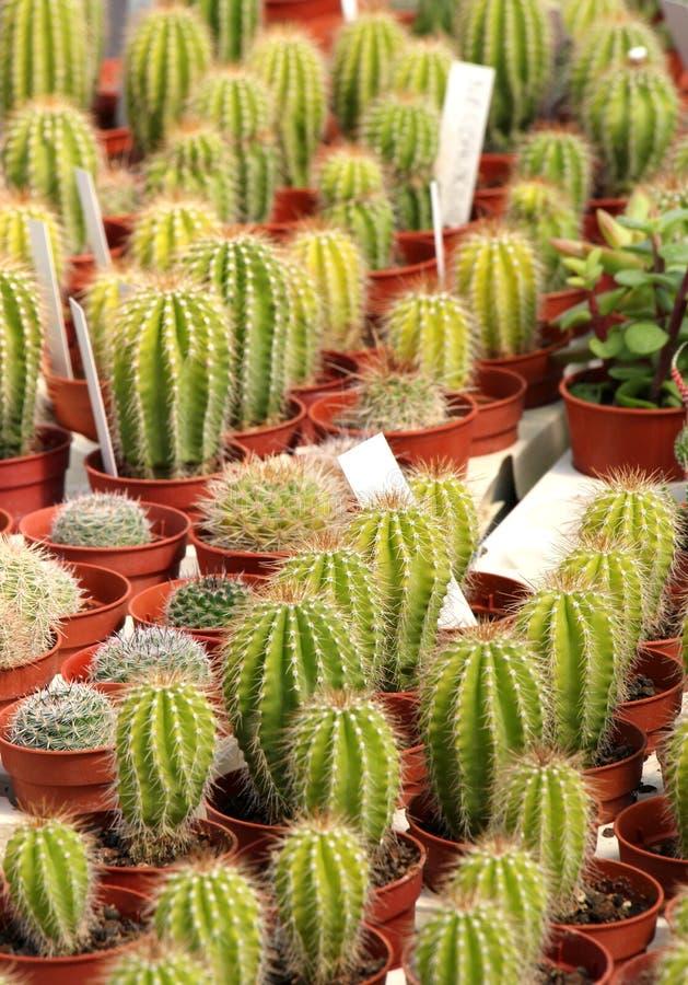 Vielzahl des Kaktus und der Succulents stockbild