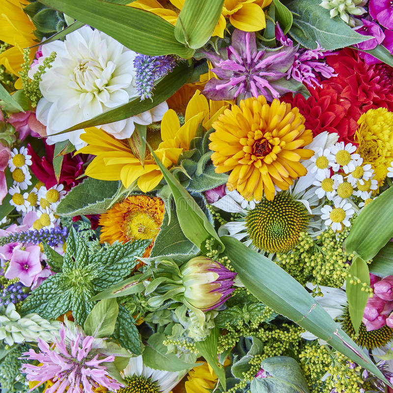 Vielzahl von bunten Blumen lizenzfreies stockbild