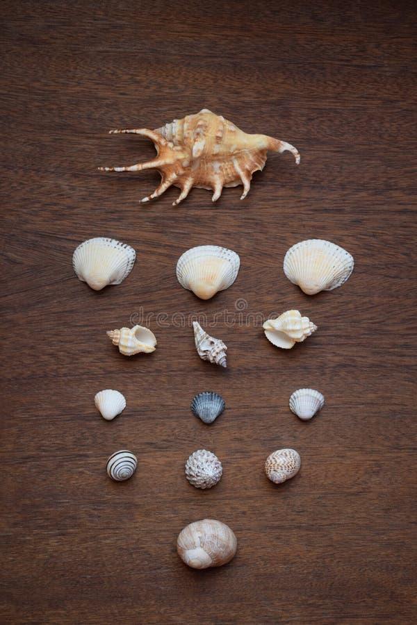 Vielzahl von den Muscheloberteilen vereinbart in den Reihen und in den Spalten auf braunem hölzernem Hintergrund stockfotos