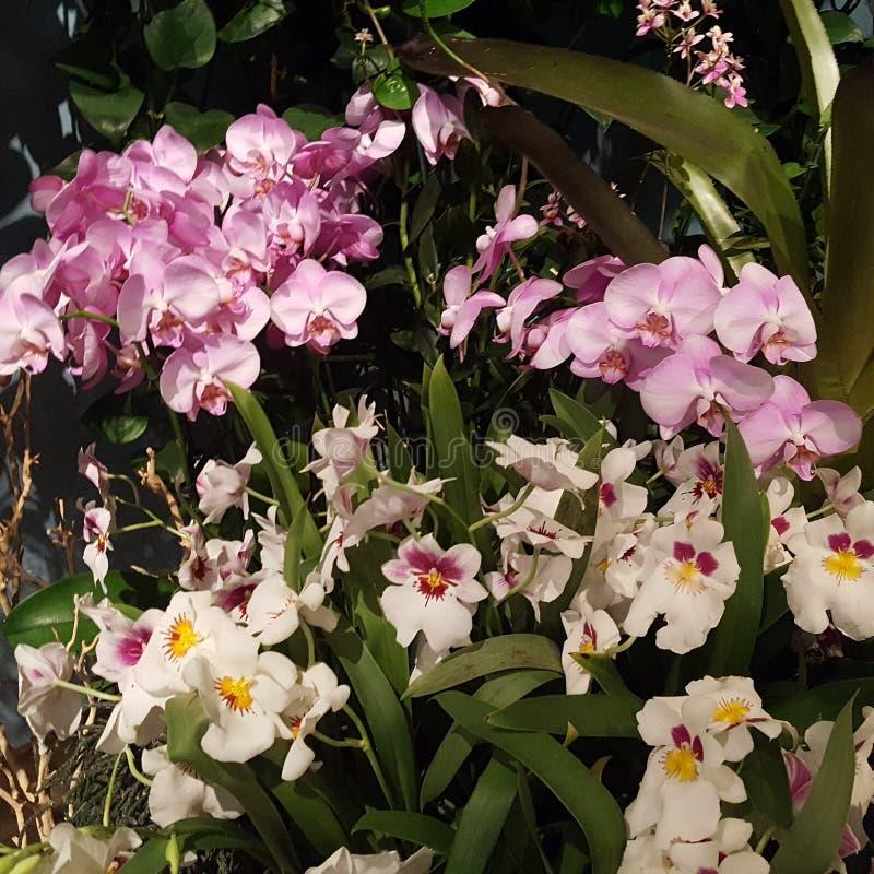 Vielzahl von den Orchideen zusammen gruppiert lizenzfreie stockfotografie