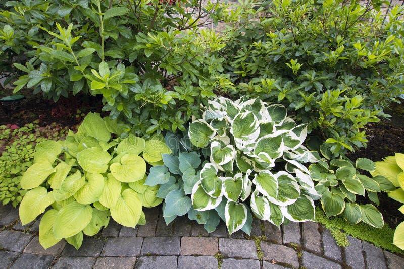 Vielzahl von Hostas und von Sträuchen entlang Garten-Pfad stockfotografie