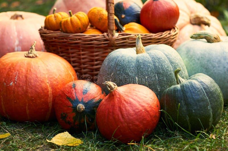 Vielzahl von Kürbisen, Herbsterntezusammensetzung mit gefallenen Blättern, Kopienraum, Ernte lizenzfreies stockfoto