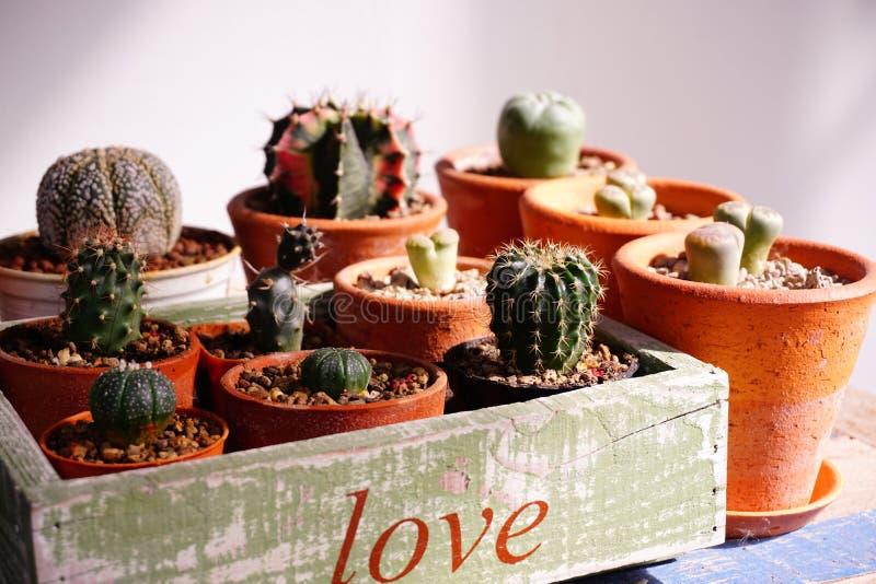 Vielzahl von Kaktustöpfen im Kasten, Farbe ` Liebe ` lizenzfreie stockfotografie