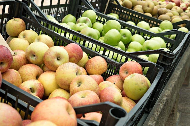 Vielzahl von organischen Äpfeln in den Kisten stockfoto