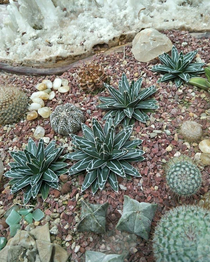 Vielzahl von Succulents-Anlagen stockfoto