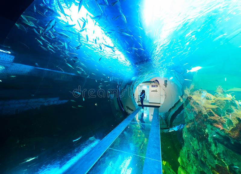 VIENA, ÁUSTRIA - 8 DE SETEMBRO DE 2017 Fishtank marinho panorâmico gigante no jardim zoológico do DES Meeres de Haus em Viena, Áu fotografia de stock royalty free
